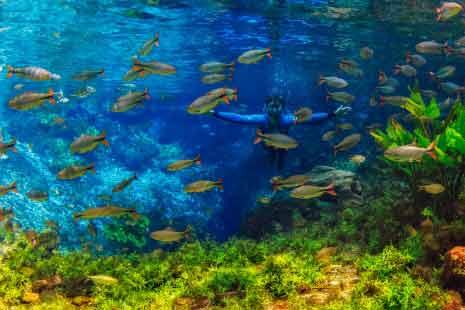 Nascente Azul (Flutuação) – Bonito ms