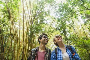 floresta de bonito 300x200
