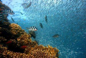 Aquário Natural Em Bonito- MS Você Precisa Viver Essa Aventura!