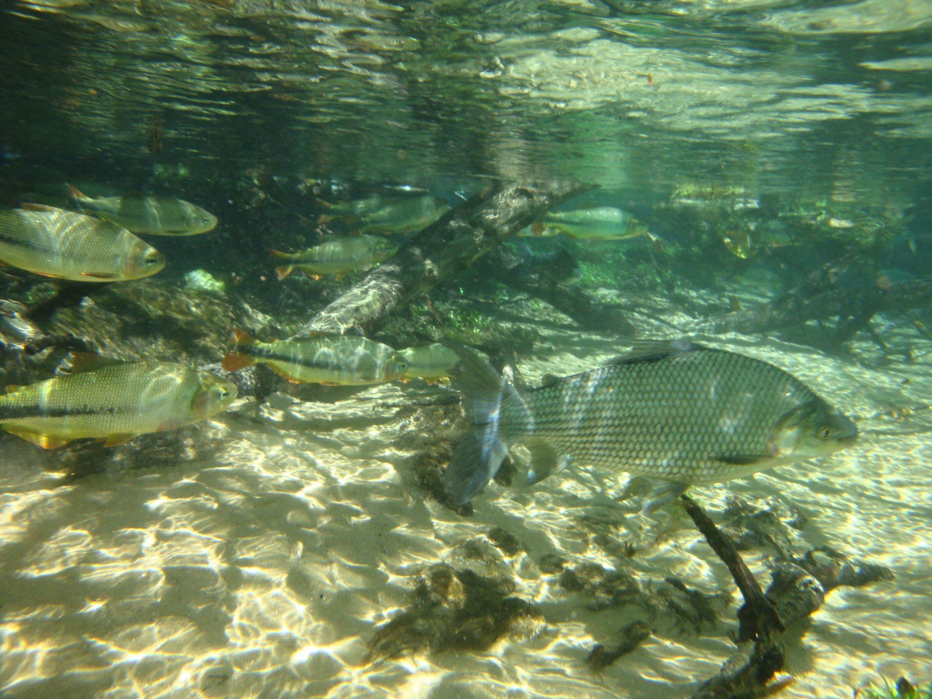 Flutuação no Aquário Natural de Bonito