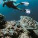 Flutuação e Mergulho Em Bonito: Quais A Diferença Entre As Práticas?