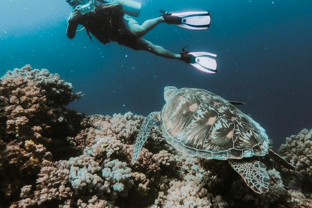 Flutuacao e Mergulho Em Bonito Quais A Diferenca Entre As Praticas